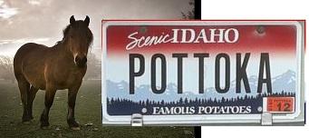 pottoka1212